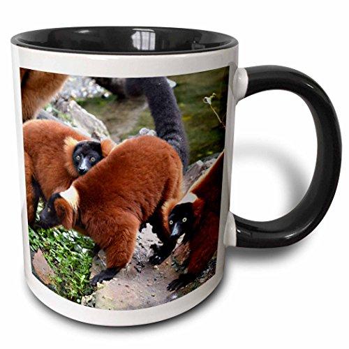 (3dRose Susans Zoo Crew Animals - group of red ruffed lemurs c animal - 15oz Two-Tone Black Mug (mug_178464_9))