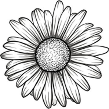 Amazon black and white gerbera gerber daisy flower vinyl decal black and white gerbera gerber daisy flower vinyl decal sticker 4quot mightylinksfo
