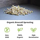 Handy Pantry Organic Broccoli Sprouting Seeds Brand - Edible Seed, Gardening, Hydroponics, Microgreens, Growing Salad Sprouts & Food Storage- Brocolli Sprouts Contain Sulforaphane