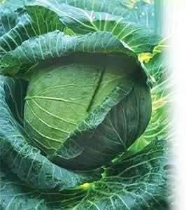 Semillas col ditmarsher Heirloom Vegetable Seeds temprana
