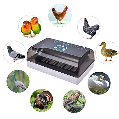 Digital Egg Incubator Hatcher,Electric Incubator Fully Automatic Egg Turning Incubator 12 Eggs Poultry Hatcher Temperature Control w/LED Display,Egg Candler,Adj Tray & Injector for Chicken Duck Goose (Shell Precision Grilles)