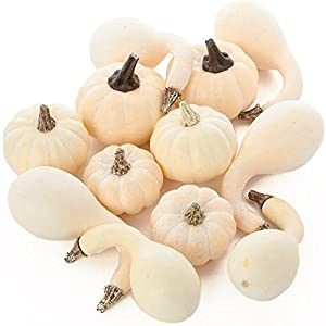Factory Direct Craft 12 Piece Package of Assorted Harvest Off White Artificial Gourds and Pumpkins for Home Decor, Harvest Embellishing and Displaying 96