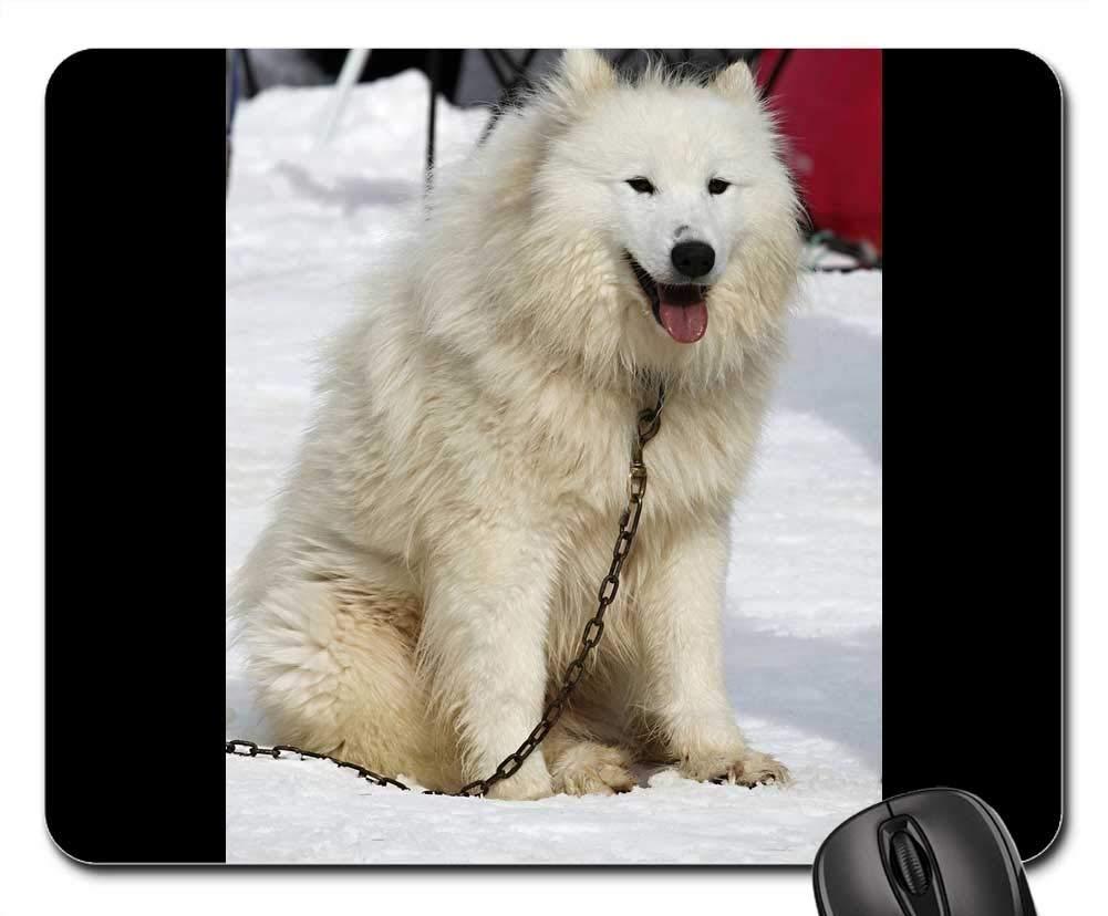 犬用マウスパッド 1123-003 220*180*3 mm B07L3L8H3X Fl17 260*210*3 mm 260*210*3 mm|Fl17