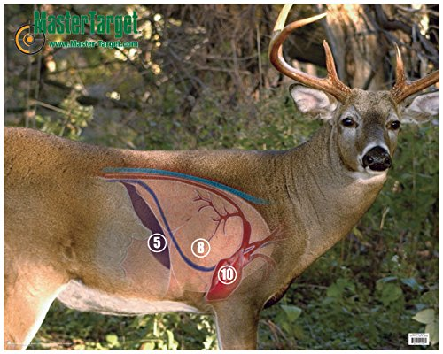Whitetail Vital Shooting Target / Uv, Water, Tear Resistant (Paper Turkey Targets compare prices)