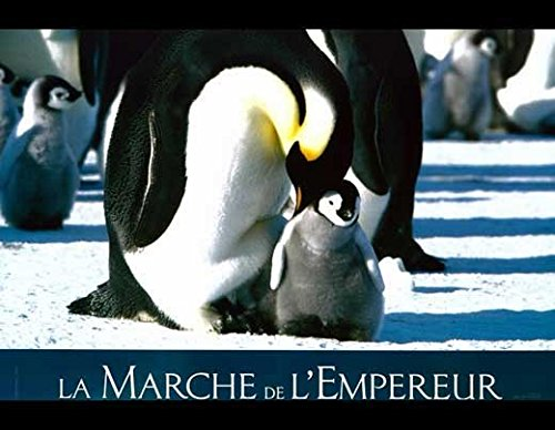 Trek of the Penguins POSTER Movie (2005) French Style E 11 x 14 Inches - 28cm x 36cm (Charles Berling)(Romane Bohringer)(Morgan Freeman)(Jules Sitruk)