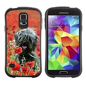 Exotic-Star Hybrid Heavy Duty Shockproof iFace Fundas Cover Cubre Case para Samsung Galaxy S5 V SM-G900 ( Surfer Perro En Campo )