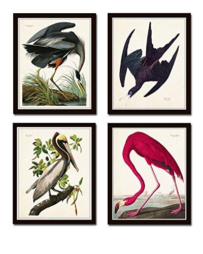 Audubon Sea Birds Print Set No.2 Set of 4 Vintage Audubon Bird Prints - Unframed