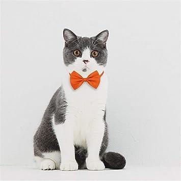 WLLRTRT Gato de Juguete Mascota interacción Gato y Gato ...