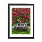 Media Storehouse Framed 24x18 Print of USA, Oregon, Steamboat Inn. Garden bench and Japanese maple tree (13973047)