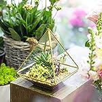 NCYP-Copper-Pyramid-Vertical-Metal-Glass-Geometric-Wall-Hanging-Terrarium-Brass-Tabletop-Succulent-Air-Plants-Holder-Planter-Fern-Moss-Box-Display-Vase-Pot-59-x-59-x-787-inches-Gold