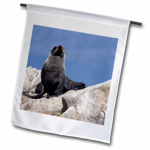 Fur Seal Islands - 3dRose fl_74908_1 Fur Seal Kaikoura Coast South Island New Zealand Au02 Dwa5709 David Wall Garden Flag, 12 by 18-Inch