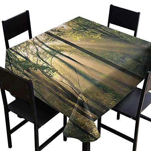 Decor Collection Table ClothsFarm House Decor,Morning Sunrays seen Through Trees Summertime Countryside Scenic View,Green Beige Black,W50 x L50 for Umbrella Table ()