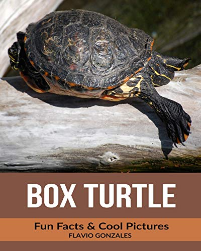 Box Turtle: Fun Facts & Cool Pictures for sale  Delivered anywhere in Canada