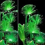 Emerald Fluorescent Flower Seeds Woopower 100 Pcs Rare Emerald Flower Seeds Night Light Emitting...