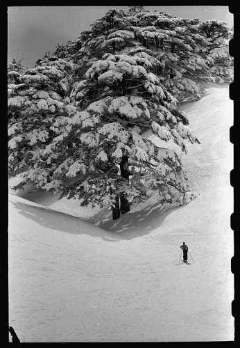 Photo: Cedars of Lebanon in snow with - Online Lebanon Shopping Sites