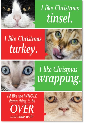 Boxed Cat Christmas Cards.12 Cats Getting Worried Boxed Christmas Cards With Envelopes 4 63 X 6 75 Inch Funny Cats Holiday Notes Hilarious Kitty Cat Christmas Cards Sassy