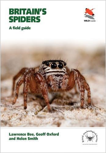 Britain's Spiders (Wildguides)