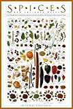 Laminated Spice Poster Print Culinary Herbs 24x36