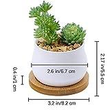 Winlyn 3 Piece Mini White Ceramic Succulent Planter