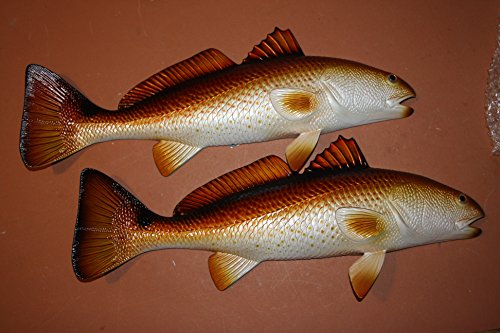 Redfish Trophy Mount, 19