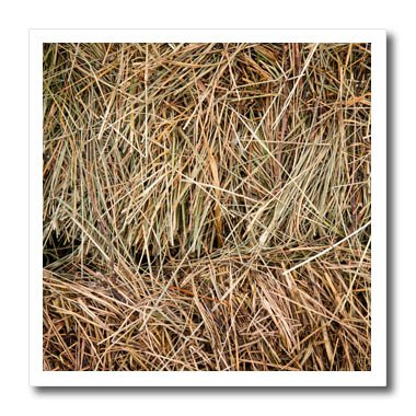 3dRose Alexis Photography - Textures - A stack of fresh hay to feed cattle - 10x10 Iron on Heat Transfer for White Material - Prints T Fresh Shirts