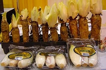 Plentree Achicoria Seeds * 100 * * La endibia Francesa Witloof Gourmet * Ensaladas * Cafã