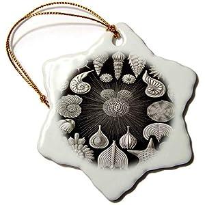 51qrwpmKg8L._SS300_ 100+ Seashell Christmas Ornaments and Shell Ornaments