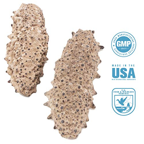 SB Organics Mexico Badionotus Sea Cucumbers - Wild Caught Sea Cucumber Dried All Natural Nutritious Medium