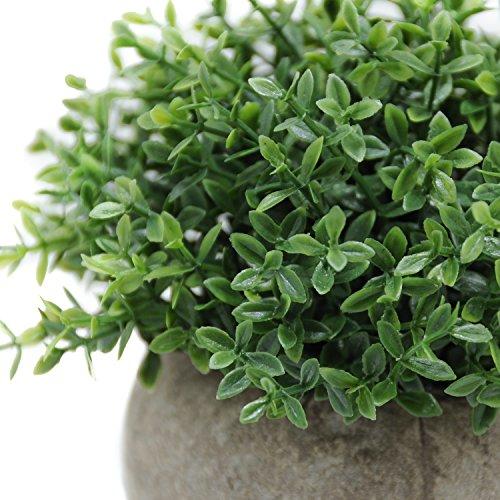 Green Kitchen Jeddah: Velener Mini Plastic Artificial Plants Benn Grass In Pot