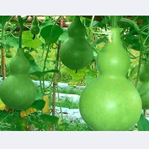 Best Garden Seeds Rare Heirloom Colorful Ornamental Bottl...