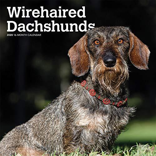 Wirehaired Dachshunds - Rauhhaardackel 2020 - 18-Monatskalender mit freier DogDays-App: Original BrownTrout-Kalender [Mehrsprachig] [Kalender] por Inc Browntrout Publishers