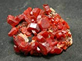 Large Vanadinite Cluster From Morocco - 1.8""