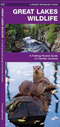 Great Lakes Wildlife: A Folding Pocket Guide to Familiar Species (Pocket Naturalist Guide Series) by James Kavanagh - The Mall Waterford