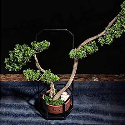 Xuejuanshop Artificial Bonsai Tree/Welcome Bonsai Artificial Plant Tree Bonsai Fake Potted Ornament Home Hotel Garden Decor Gift Wrought Iron Ceramic Crafts Decoration Faux Potted Plant: Home & Kitchen