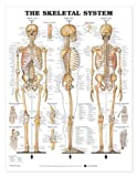 The Skeletal System Anatomical Chart, Anatomical Chart Company Staff, 1587796821