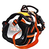 Otterly Pets Dog Harness Sets for Medium to Large Dogs (Harness & Seat Belt - Orange, Medium)
