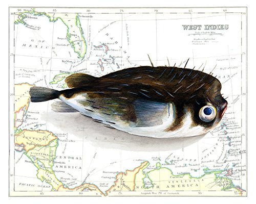 Beautiful 8x10 Puffer Fish Print Overlaid on a 19th Century Reproduction Map of the Caribbean West Indies. Size: 8x10 Inches (Puff2Map810)
