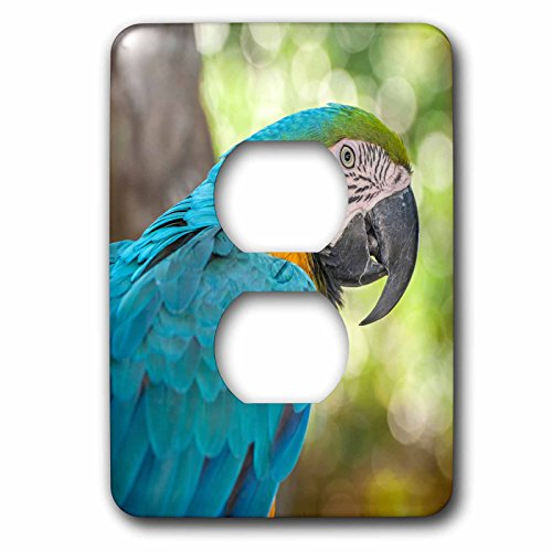 3dRose (lsp_208295_6) USA, Florida, Orlando, Blue and Yellow Macaw, Gatorland 2 Plug Outlet - Florida Orlando Outlet