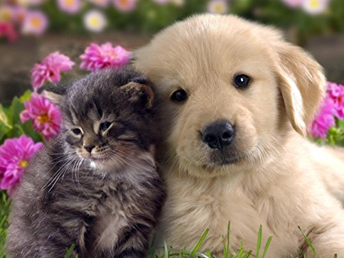 BEST FRIENDS CAT & DOG GLOSSY POSTER PICTURE PHOTO kitten puppy cute - Puppies Cute Pictures Of