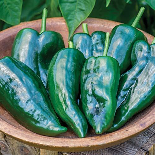 Burpee Big Boss Man Hot Pepper Seeds 25 seeds