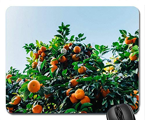 Tangerines Tree Harvest Customized Mouse Pad Rectangle Mouse Pad Gaming Mouse mat