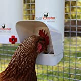 Royal Rooster Chicken Poultry Feeder with Rain