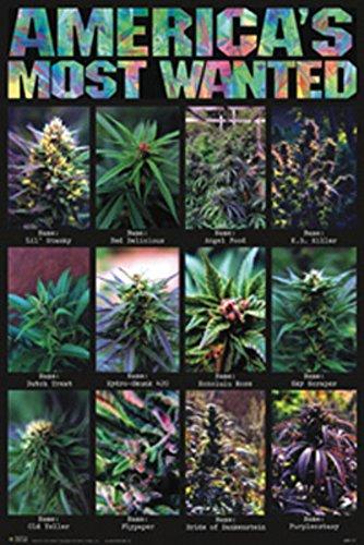24x36-Americas-Most-Wanted-Pot-Plants-Art-Poster-Print