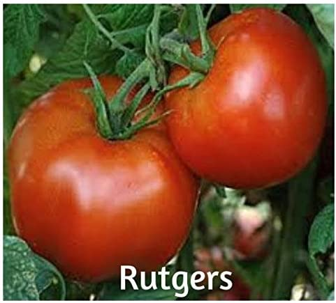 Special for Sauces Heirloom Top Quality Seeds Tomato /'/'San Marzano/'/' ~250
