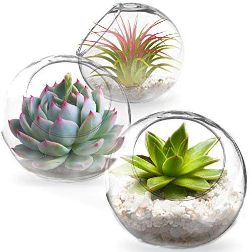 3 Tabletop Plant Containers - Creates Mini Glass Terrarium Garden - Ideal Spherical Vases for Ferns, Succulents, Air Plants, Cacti - Excellent Gift and DIY Projects - Can Withstand All Seasons (Terrarium Plants And Containers)
