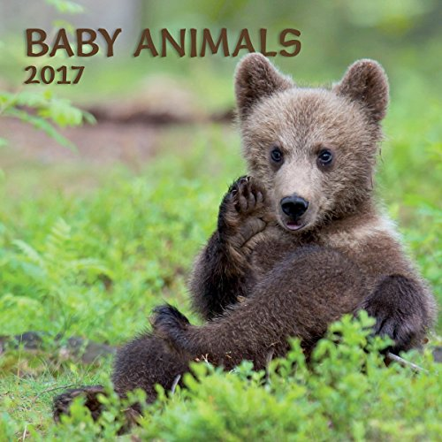 Turner Photo 2017 Baby Animals Photo Wall Calendar, 12 x 24 inches opened (17998940006)