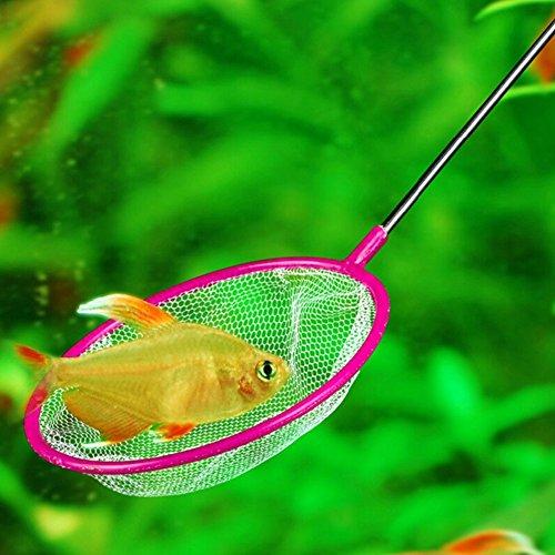 Zeroyoyo 5pcs mixed color aquarium fish tank cleaning for Small fishing net