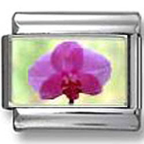 Pink Orchid Photo Italian Charm