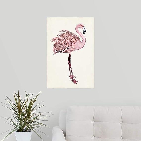 29++ Foto hewan flamingo terupdate