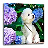 3dRose dpp_80886_2 Adorable Bichon Frise Puppy Among Hydrangeas-Wall Clock, 13 by 13-Inch For Sale